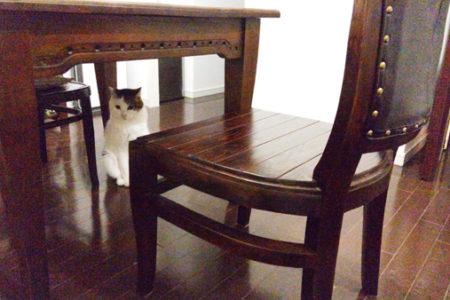 暮らしに沿ったカタチ~猫と家具と私 O様の場合